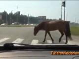 Russo al volante, pericolo costante, il video degli incidenti d'auto più esilaranti